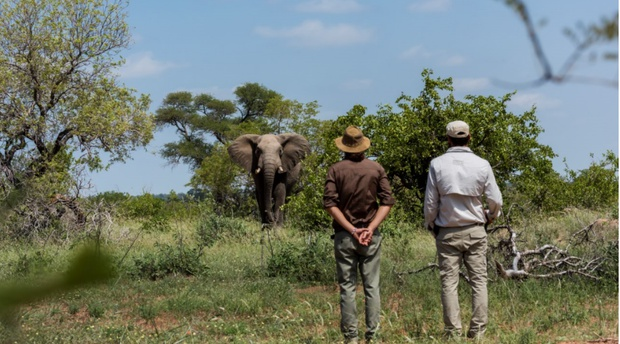 Best walking safari kruger